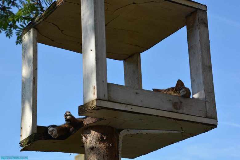 Neelix de kater. - Neelix aan het slapen in zijn toren, op bijna 2.5m boven de grond.