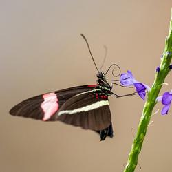 vlinder_01