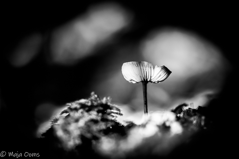 All alone... - Ik blijf het leuk vinden om foto's van paddenstoelen om te zetten naar zwart wit...