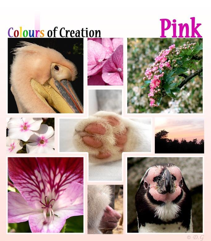 COC: Pink - Dit is alweer de zesde collage uit mijn 7-delige serie &#039;Colours of Creation&#039;<br /> <br /> Kleuren uit de natuur.<br /> <br />