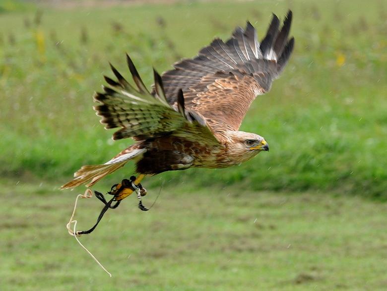 roofvogel foto middag - Genomen op Texel bij de fotomiddag van <br /> &quot;Ëureka&quot; op Texel.