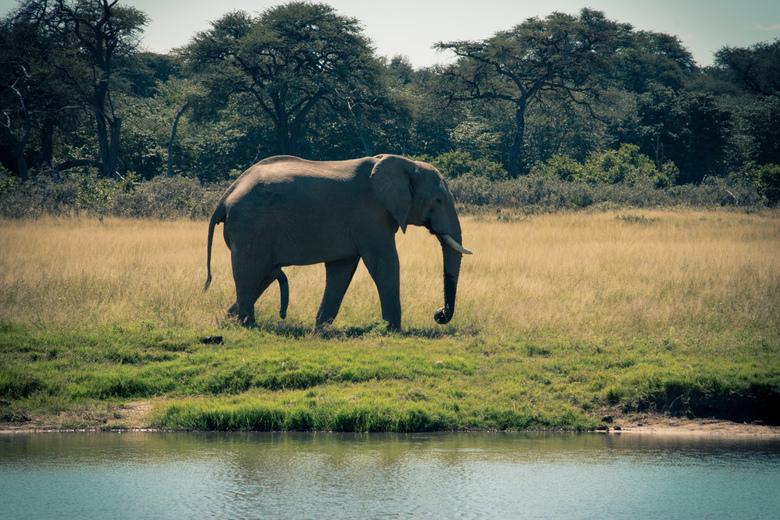 Spreekt voor zich - Het nemen van een bad schijnt opwindend te zijn voor een olifant.