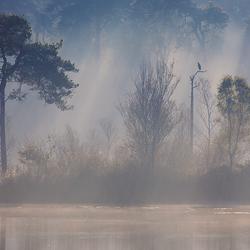 Misty birdscape 3