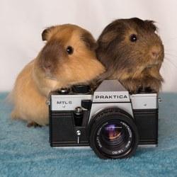 Goofy en Roosje hebben het fotografie virus