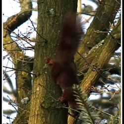 Vervolg vliegende eekhoorn