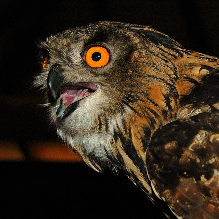 The screech of a owl - Even Linschoten project opzij gezet. Ben er nog wel niet klaar mee, maar even wat anders.<br /> Zo kwam ik oa deze uil tegen,