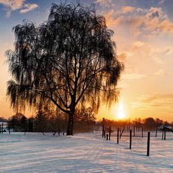 Sunset winter tree