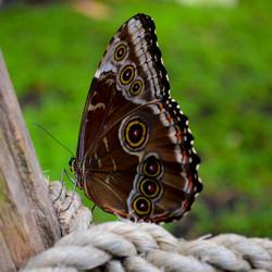 vlinder op hek