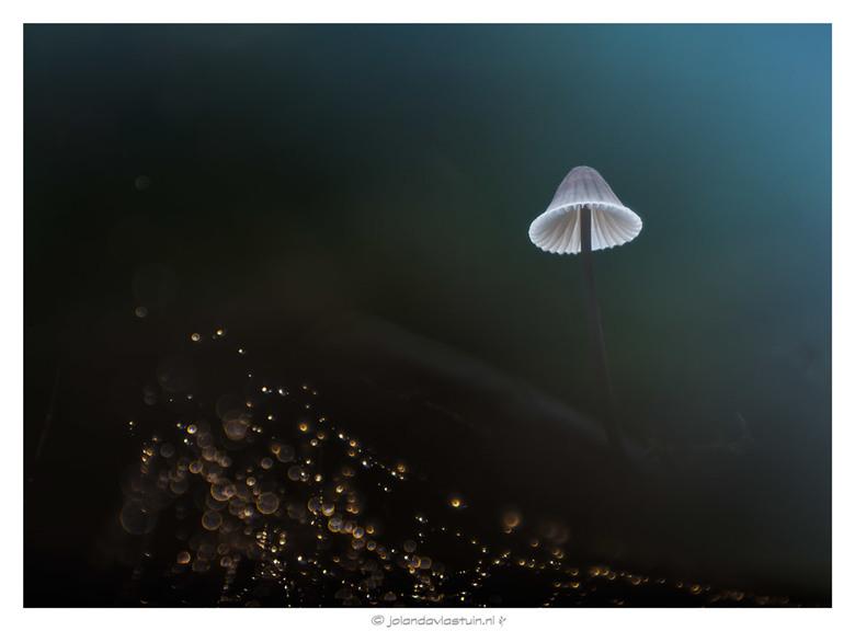 miracles - Kleine paddestoel meervoudig belicht met de Trioplan 50 mm. 2.9