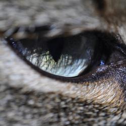 Het oog dat alles ziet.