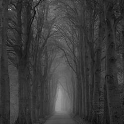 Waarheen leidt de weg