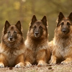 Onze drie meiden ❤️