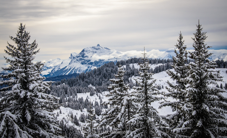 Blue mountain - Landscape with christmass trees covered with snow and a mountain far away, France, Morzine, Les Gets