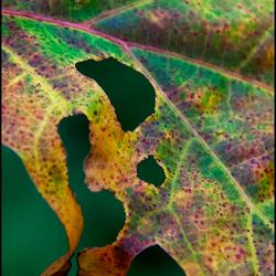 Autumn 02