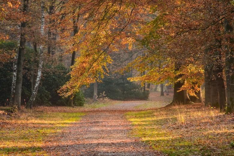 Autumn at it's best - Deze foto is van twee weken geleden, toen de herfstkleuren in de bossen rond mijn woonplaats hun maximum bereikt hadden. Zodra h