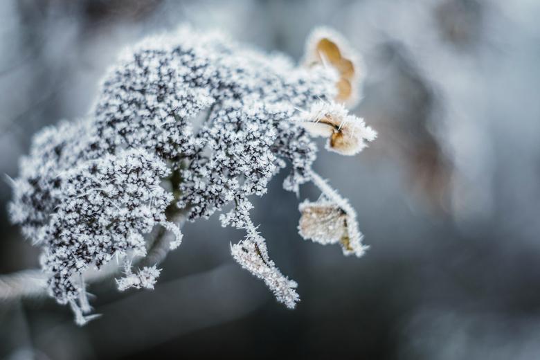 Winter - Winter has arrived! <br /> Even een frisse neus gehaald in de koude wind. <br /> Ik ben altijd blij als het weer januari is en we weer gewo