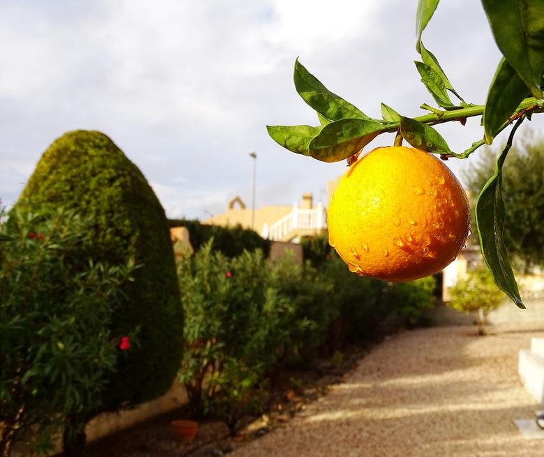 Regendruppels - in navolging van Wim sinasappels met druppels. Alleen die van mij in eigen tuin. groeten uit een wat kouder, 16 graden, Spanje. Nel