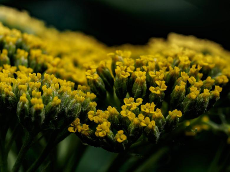 Luie Tuinman-5 - Ik weet vrijwel niets over bloemen, planten en insekten. Ik heb daarom dan ook geen idee om welke plant het hier gaat...<br /> <br /