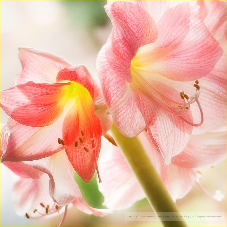 Memory of my love - ....voor eeuwig...