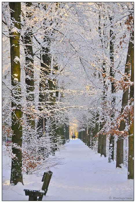 Sneeuw Laantje -