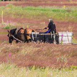Op weg naar de oogst