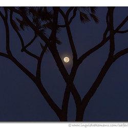 Moon Doom