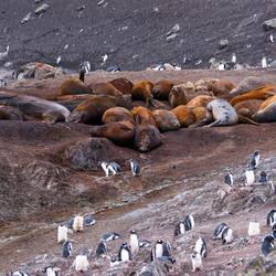 wildernis-op-Antarctica