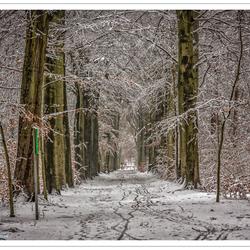 Winters bos (2)