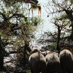 stork admirers