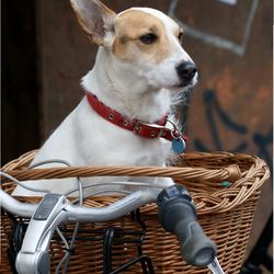 Hondje in een mand