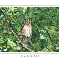 Ransuil