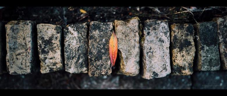 """Herfst? - Herfst?<br /> Dit is niet de enige struik/boom die al redelijk wat gekleurde bladeren heeft geproduceerd. Wel heel mooi <img  src=""""/images/"""