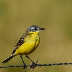 Geel op geel