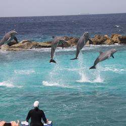 dolfijnen dansen in hun vrijheid, maar blijven liever beschermd