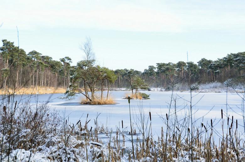 DSC_3267.JPG - tropisch eiland in het winterlandschap
