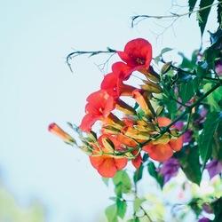 kleurrijke bloemenpracht