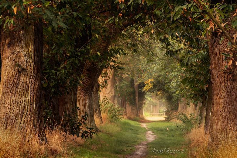 Autumn in August. - Deze heb ik vanochtend genomen. Het leek wel herfst op deze mooie augustus ochtend....