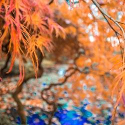 Herfst in Park Clingendael