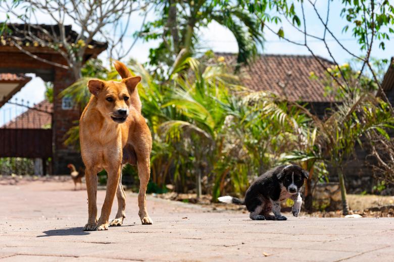 Bali_110 -