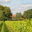 Bewerking: Wageningse wijngaard