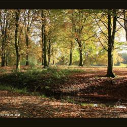 Herfst in het bos I