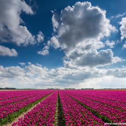 Noord-oost polder