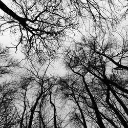 Bomenpatronen
