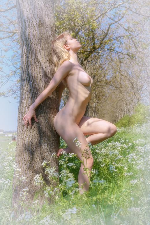 longing for spring - Deze foto van Angel White heb ik in mei vorig jaar gemaakt.<br /> Nu geplaatst, om het verlangen naar de lente te uitten ...