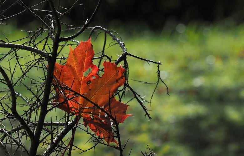 Herfst... - De Herfst geef ook weer , mooie kleuren.<br /> Gevangen.