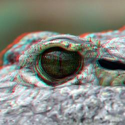 EYE Alligator Blijdorp Zoo Rotterdam 3D anaglyph