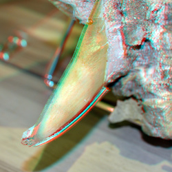 Tand Megalodon in NHM Rotterdam 3D