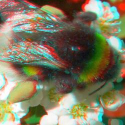 Bee 3D Lumix GF3 macro H-FT012 +10+