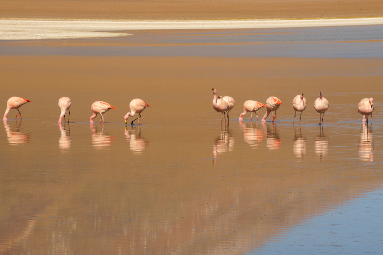 Bolivia, flamingo's - Bolivia was betoverend. De flamingo's die in het meer reflecteerden waren een van de hoogtepunten!