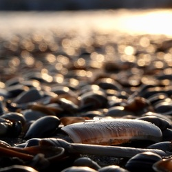 schelpen op strand